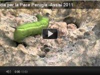 Spot Marcia Perugia-Assisi 2011